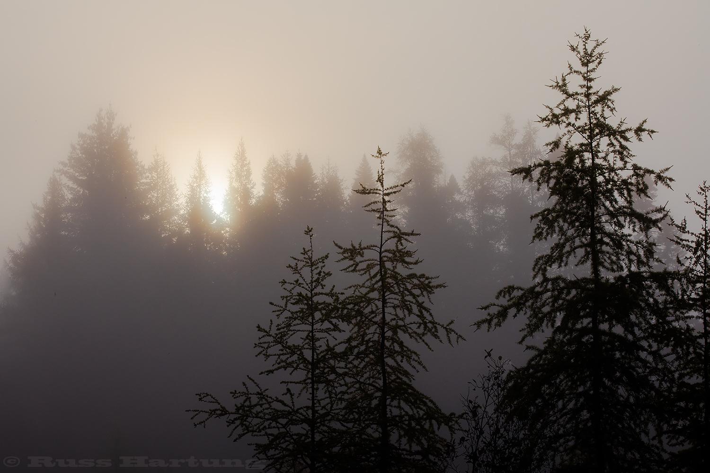 SunFogTreesBloomingdale©1500px.jpg