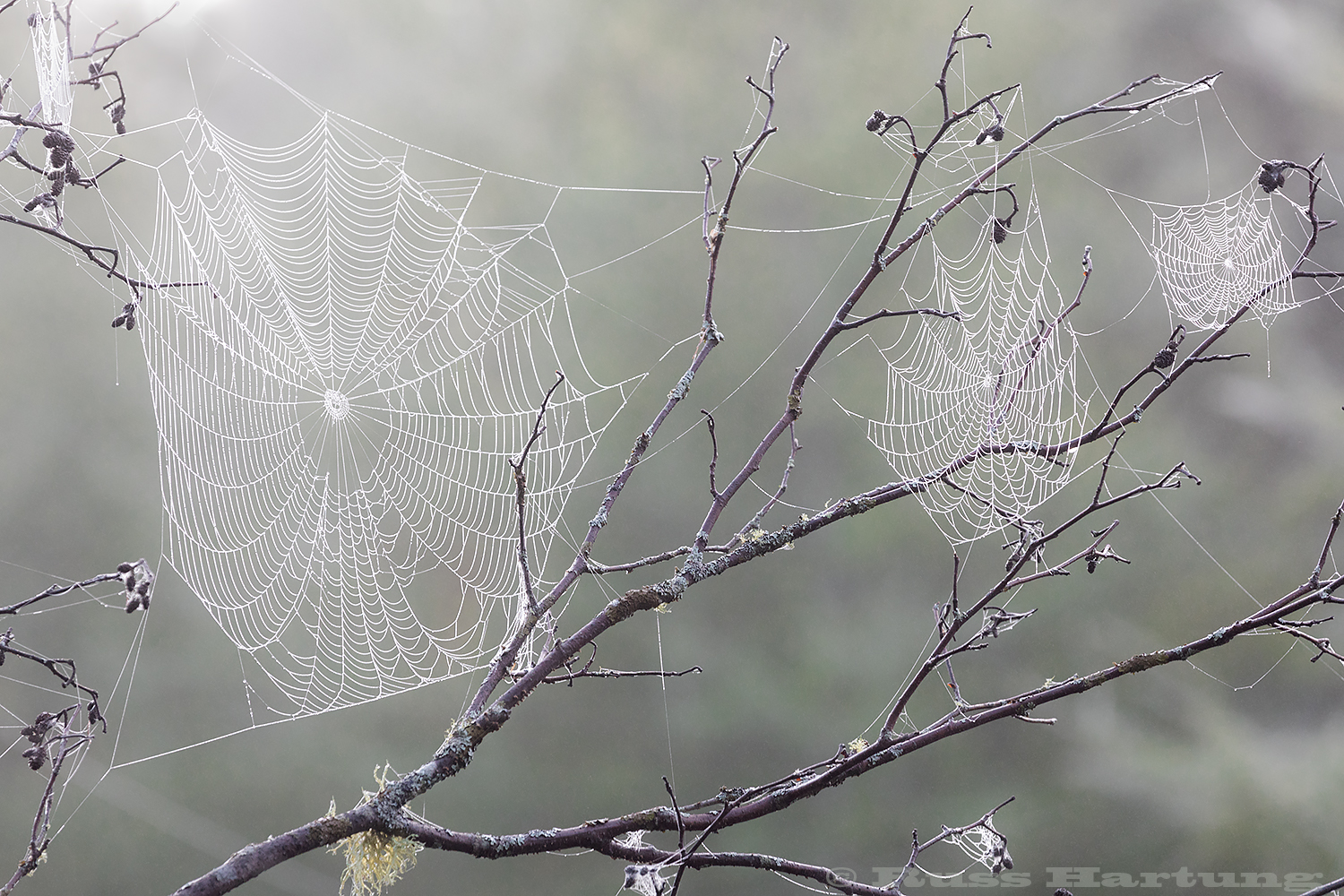Spider webs covered in morning frost on the Bloomingdale Bog trail.
