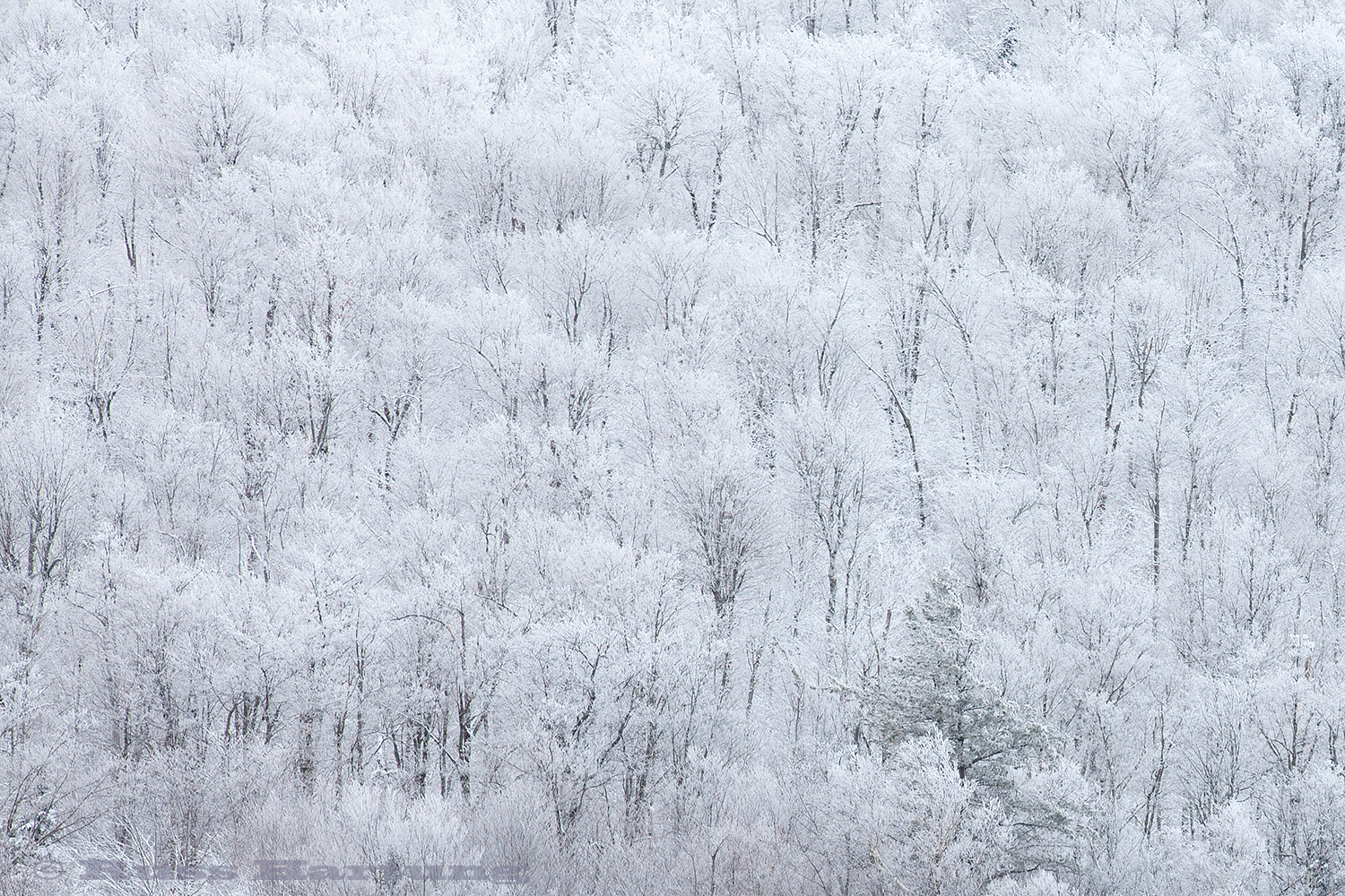Patterns made by trees and recent snowfall.