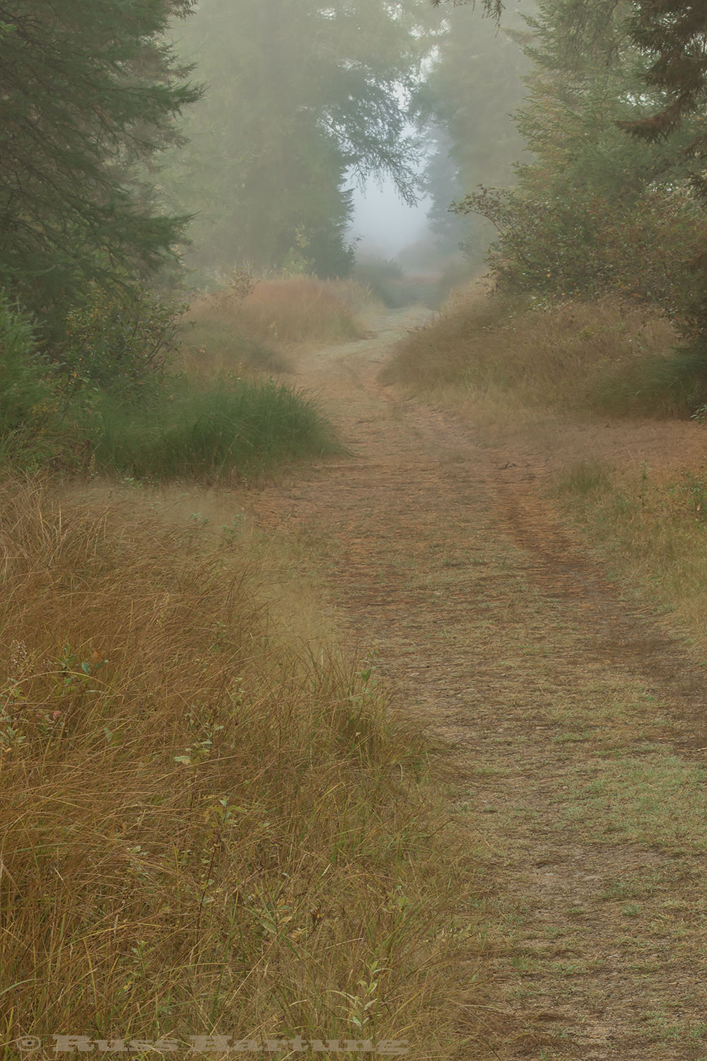 Bloomingdale Bog trail in the early morning fog.