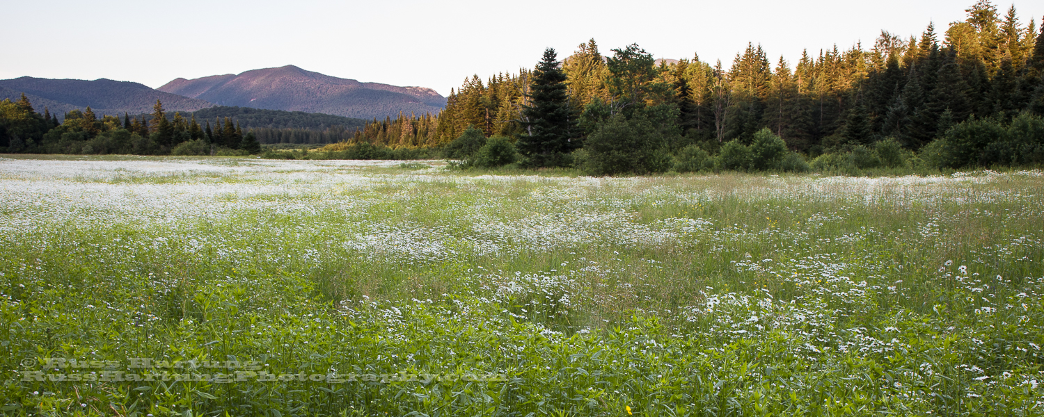 Meadow and distant mountains along the Adirondac Loj road.