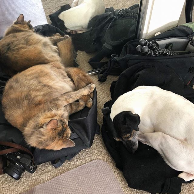 Packing up for a shoot. I don't think they want us to leave.
