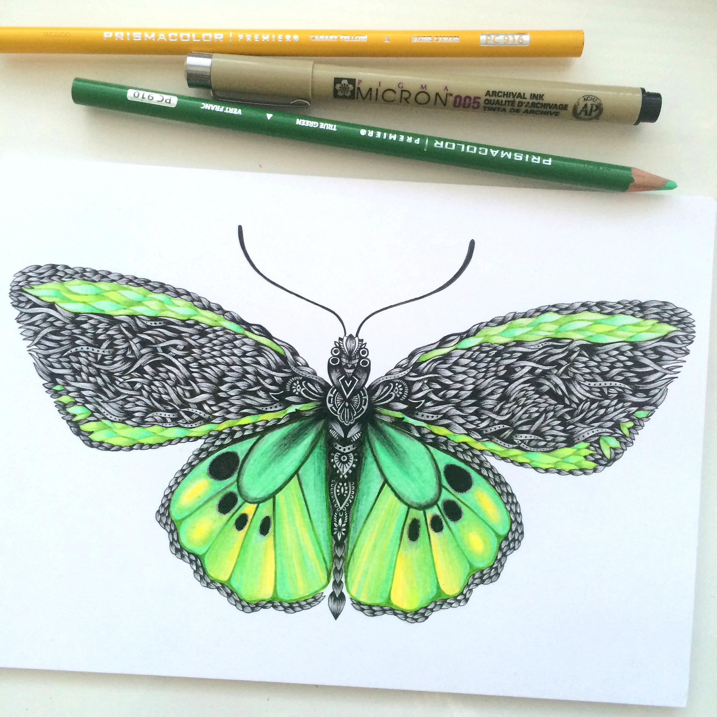 Cairns Butterfly.jpeg