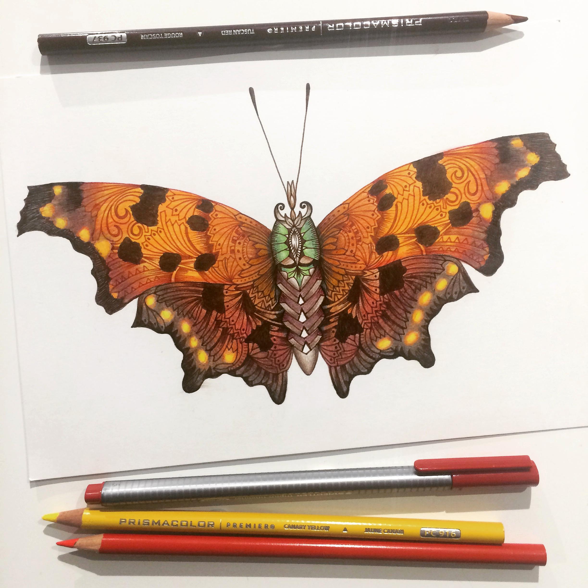 Eastern Comma Butterfly.jpeg