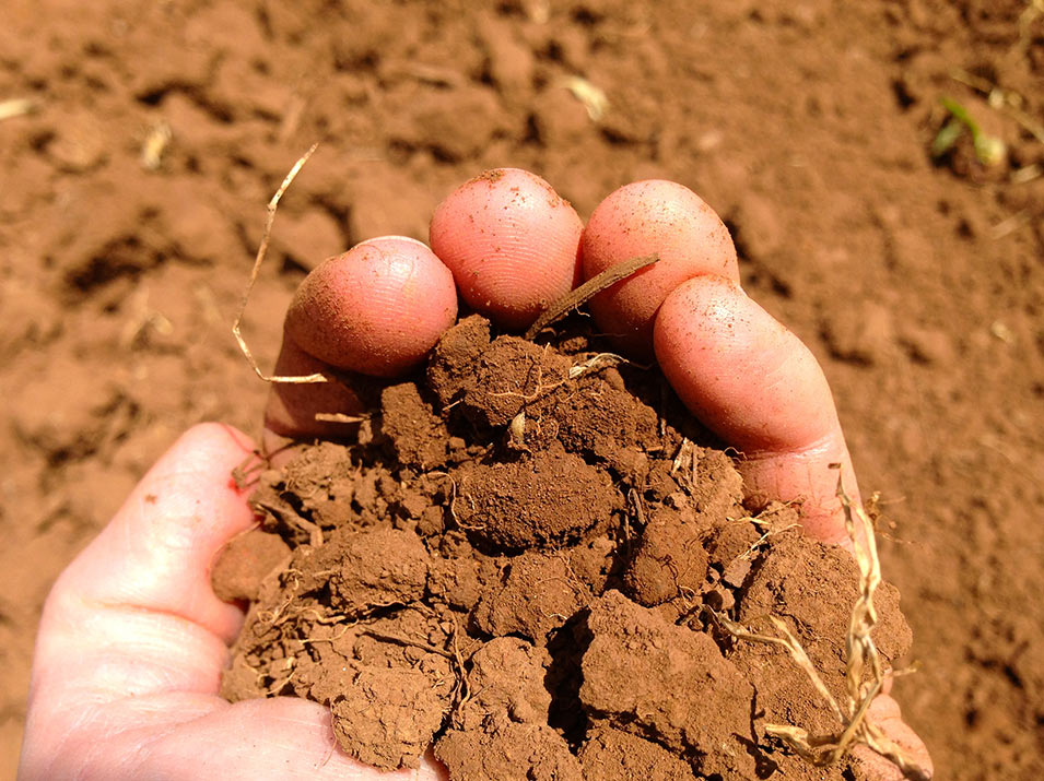 Red Jory Soil of Maresh