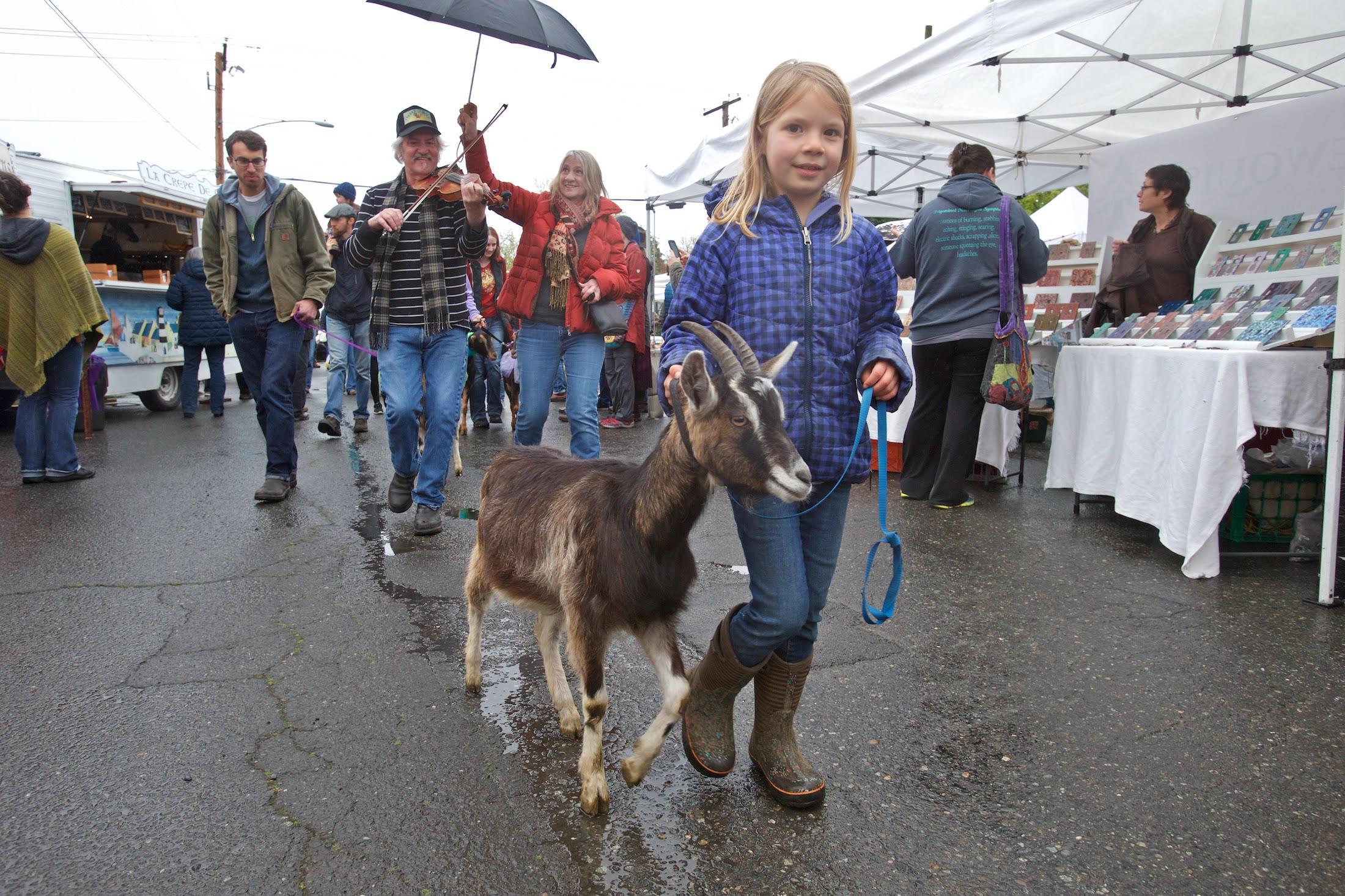 Goat parade photo by Steven Mullensky