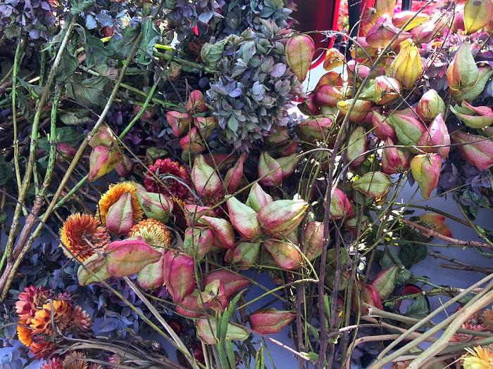 Carmen Winter flowers.jpg