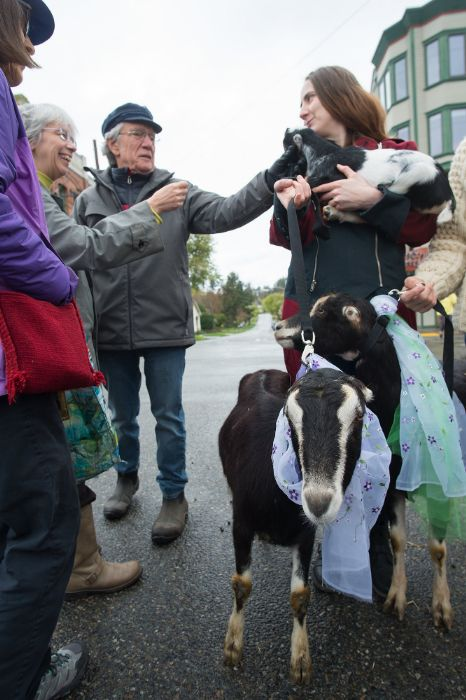 Opening day goat parade 2018. Photo by David Conklin.