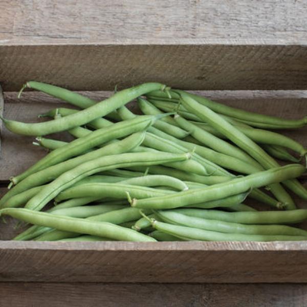 Bean Green Bush Provider