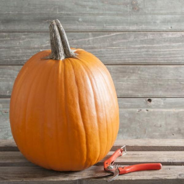 Pumpkin Carving Howden