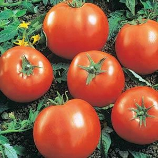 Tomato Ball's Beafsteak