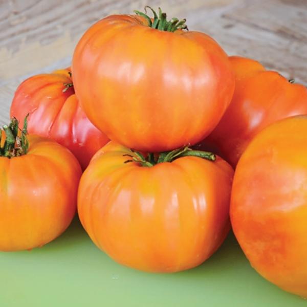 Tomato Heirloom Old German