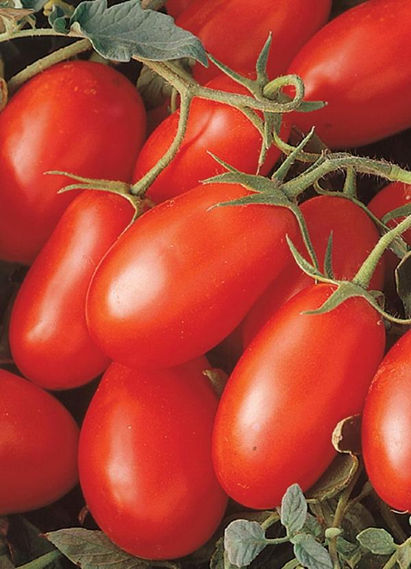 Tomato Plum La Roma III