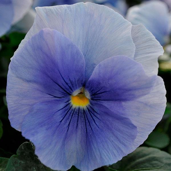 Spring Matrix Blue