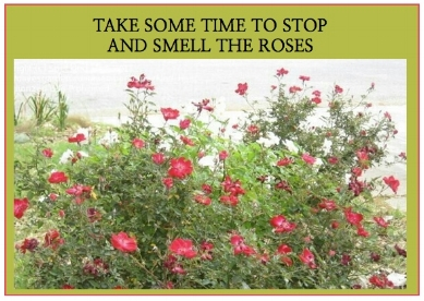 The Red wild rose: Medicinally, this flower is good for  excessive menstruation and for infant diarrhea. It is also an excellent ally for our skin. In aromatherapy, it is used to relieve stress, lift our spirits, and help with depression.