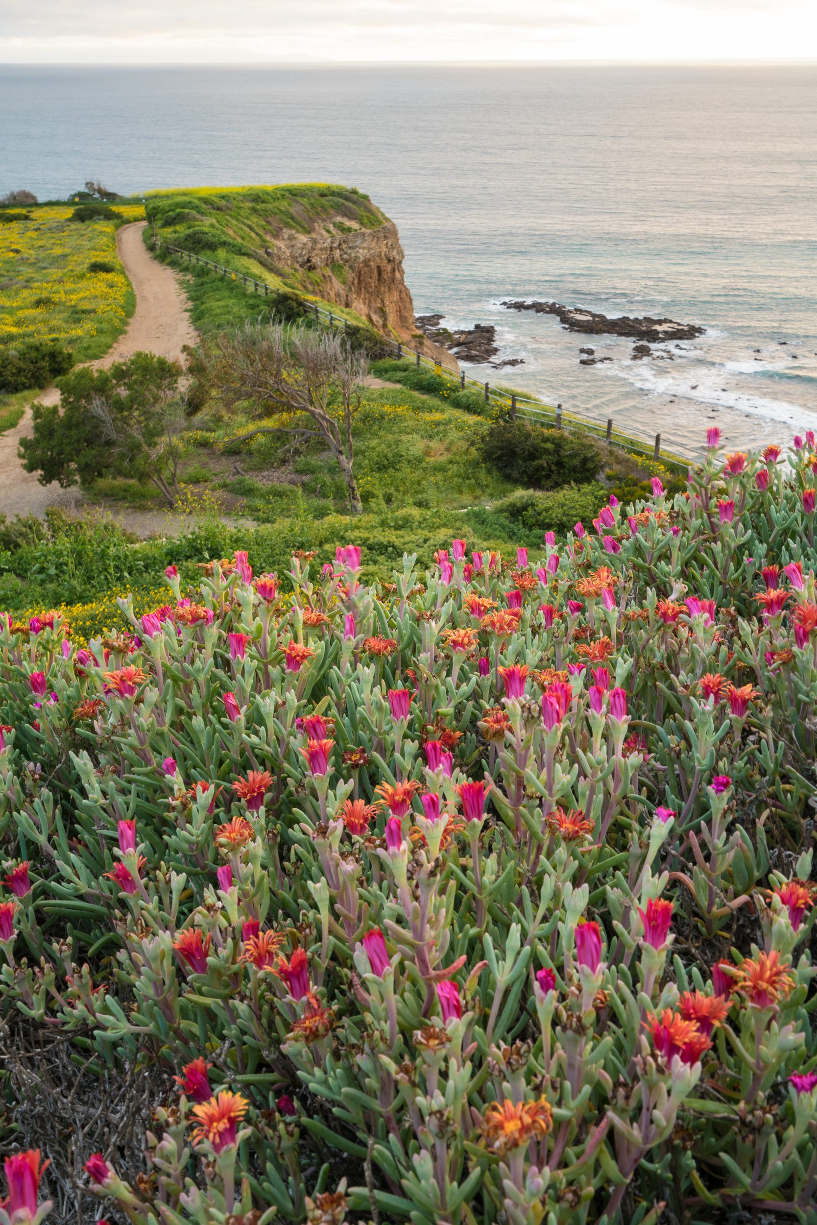 Abalone Cove Shoreline Park, California 2017