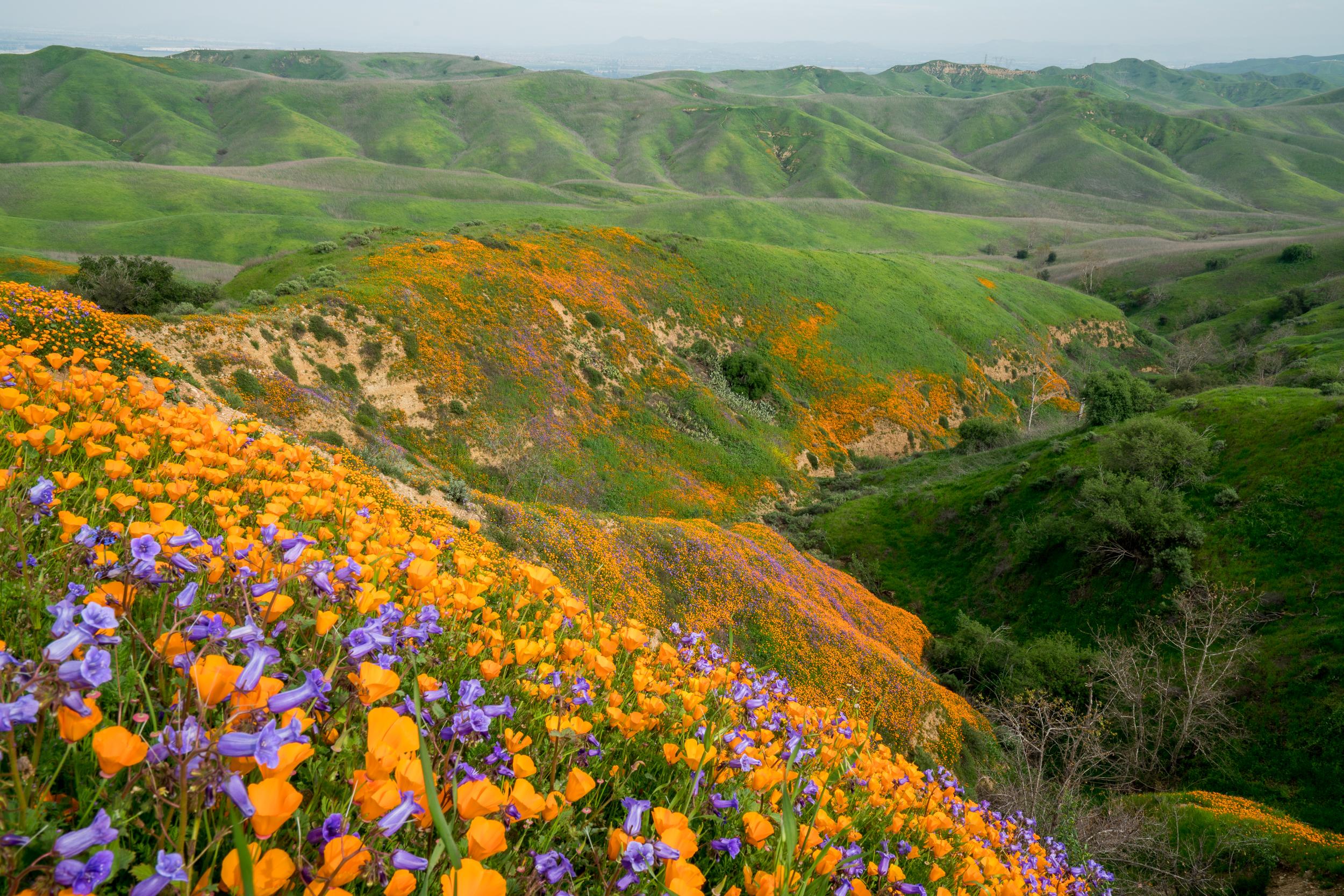 Chino Hills State Park, California 2019