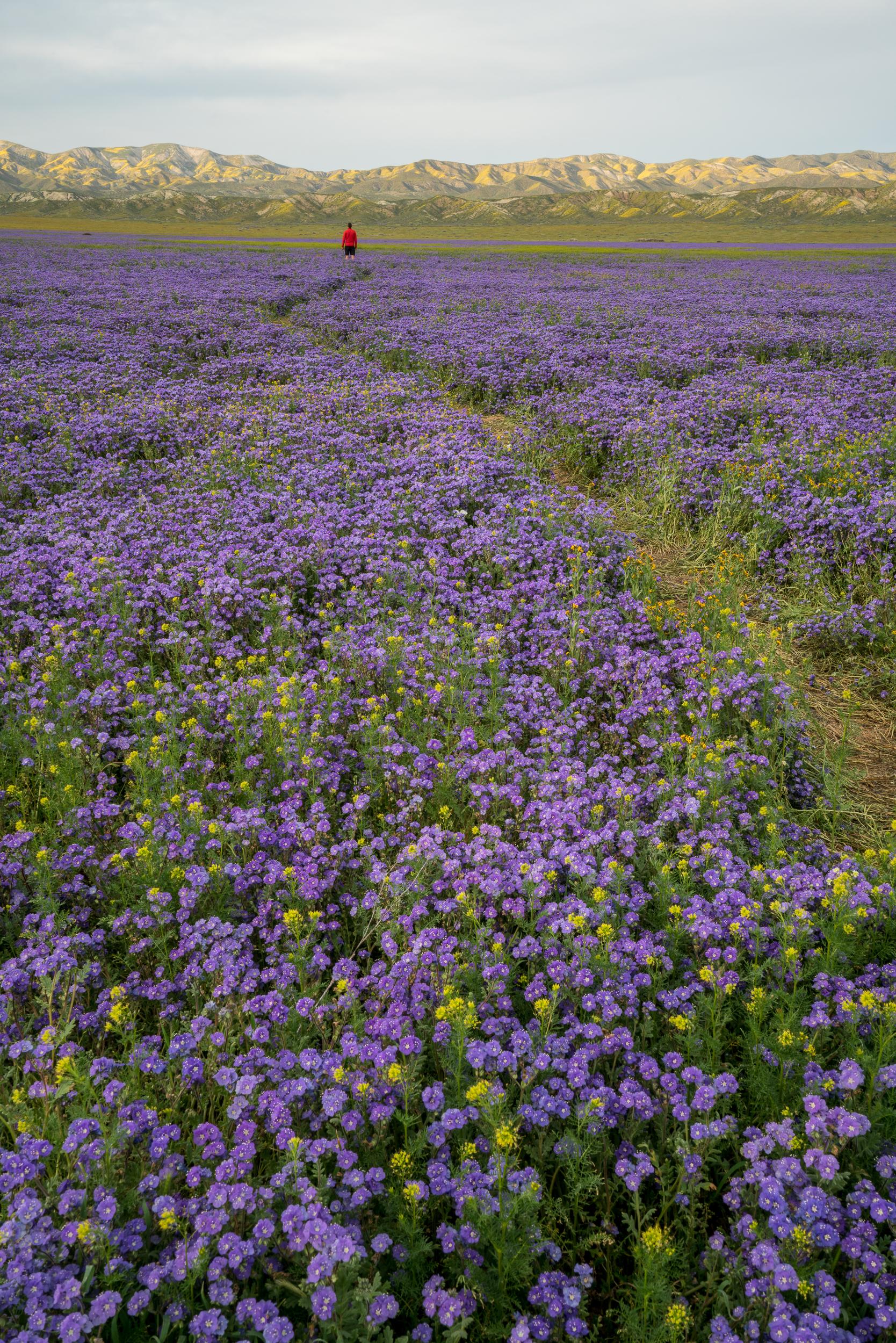 Carrizo Plain National Monument 2019