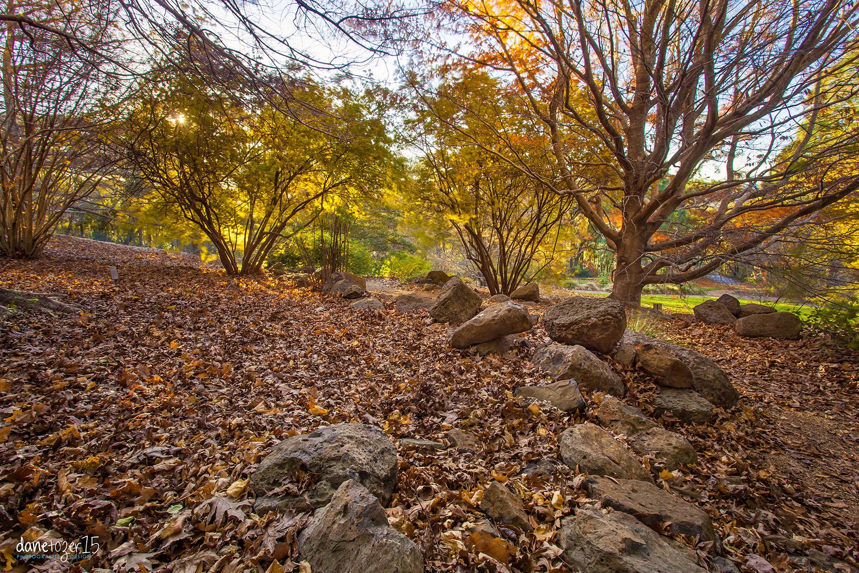 The Blue Mountains Botanic Gardens, Mount Tomah NSW