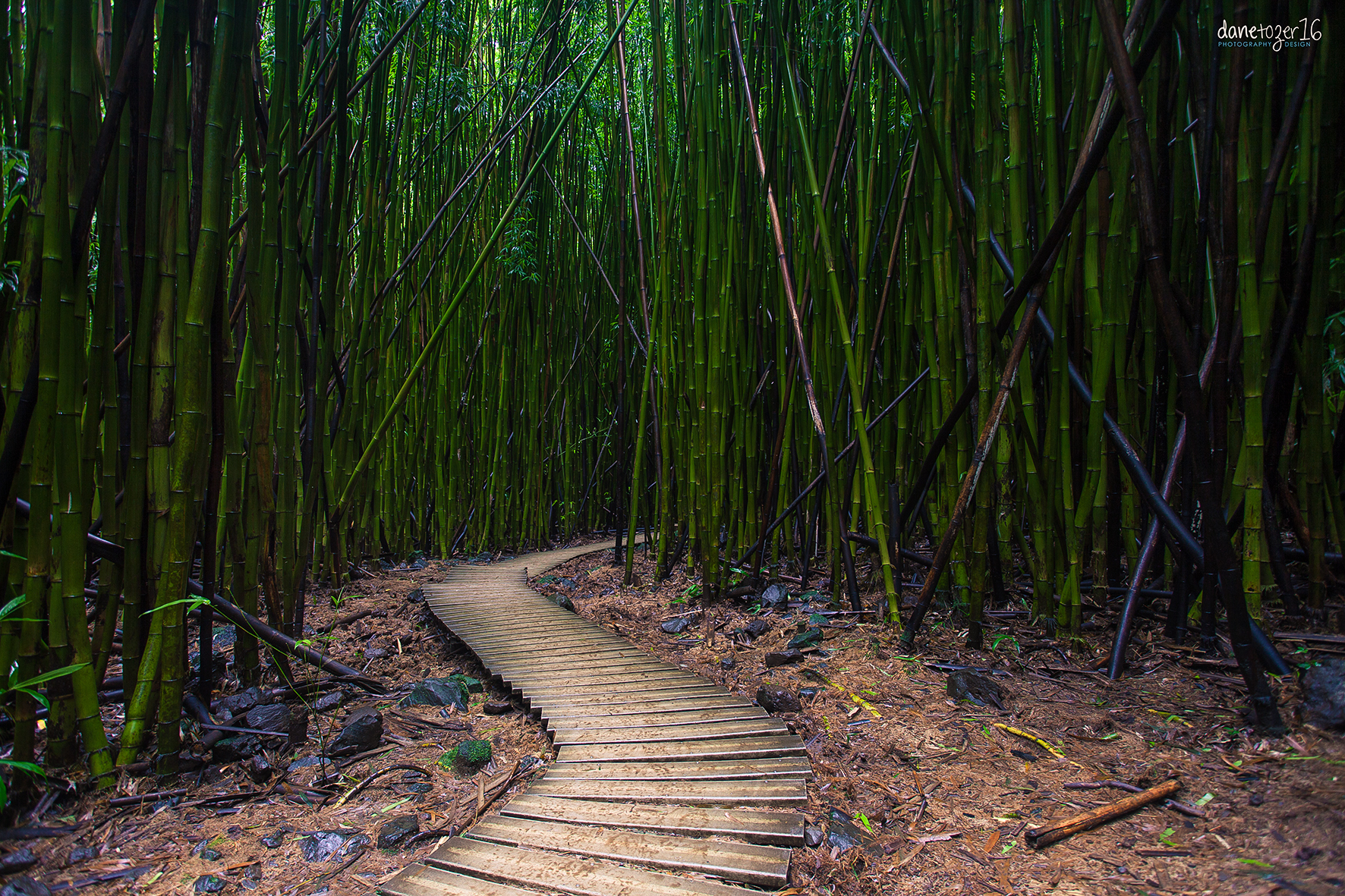 Bamboo Forest, Maui