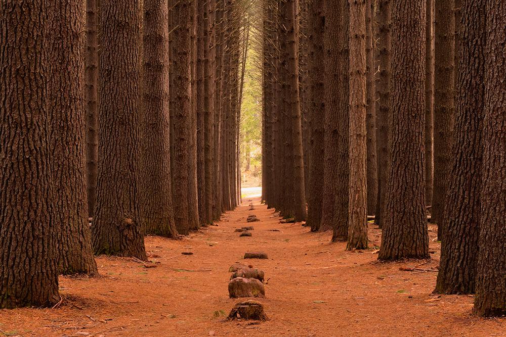 Sugar-pine-walk_-Edit.jpg