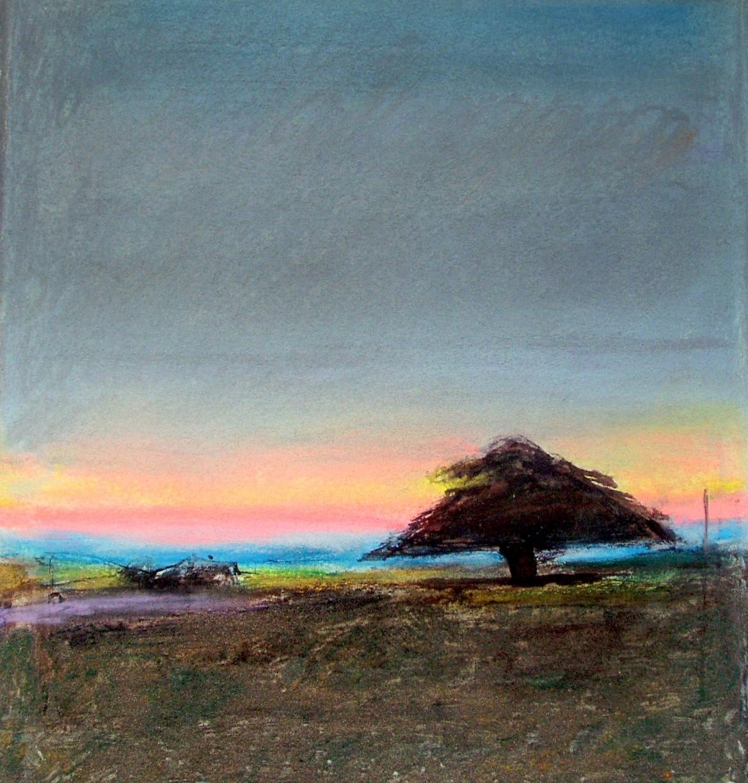 Tree, Summer, S E Australian coast