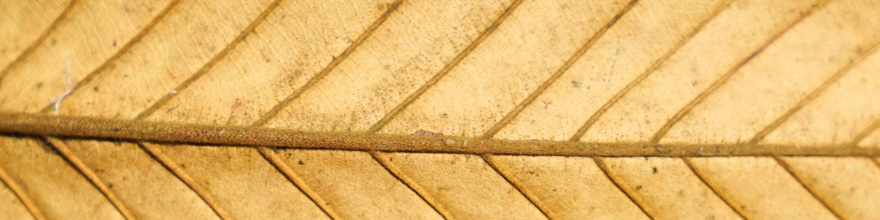SW_site_leaves-3045796_1920.jpg