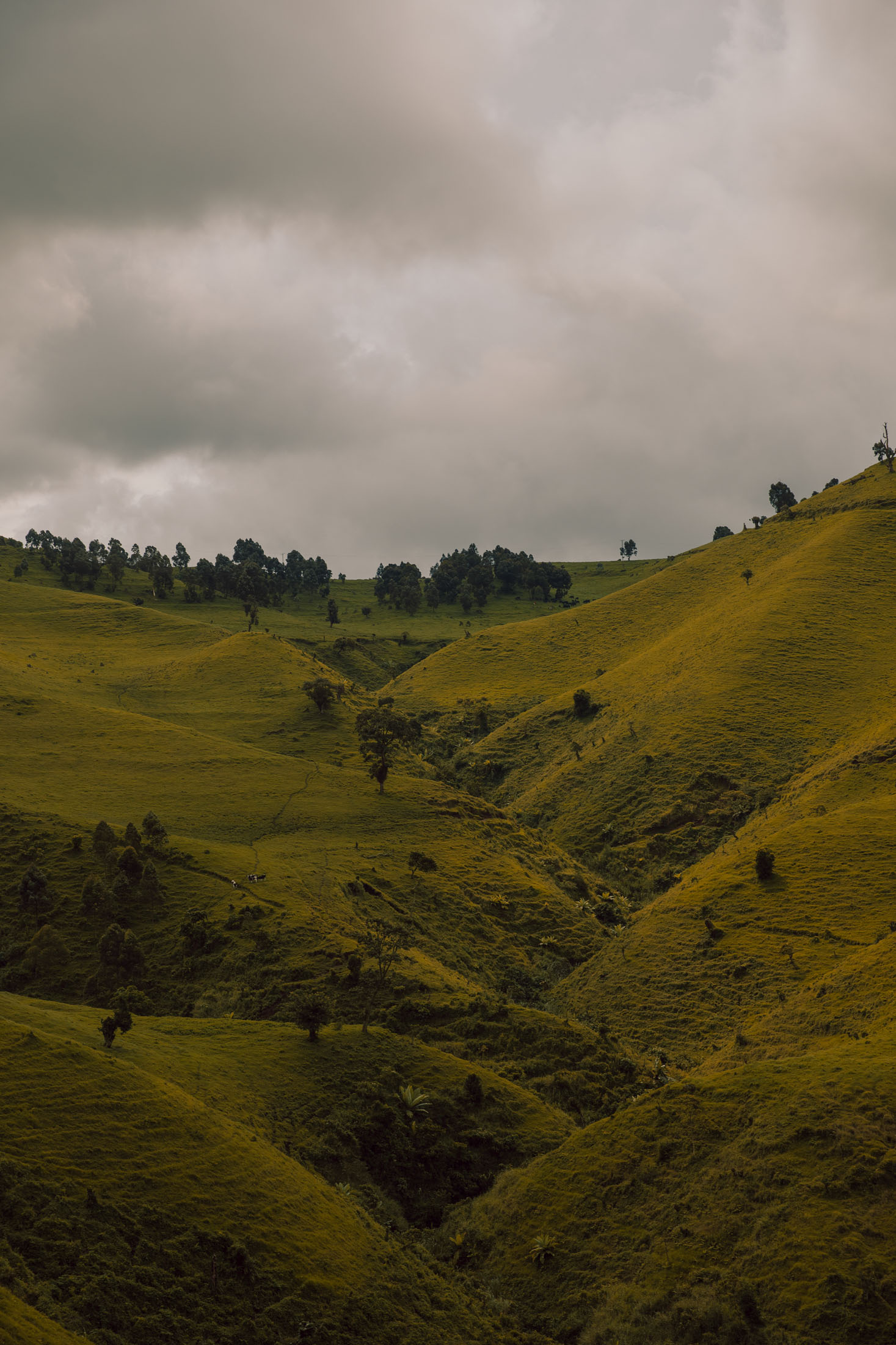 Rolling hills in Masisi Territory, North Kivu Province. The province is home to dozens of armed militias and rebel groups.