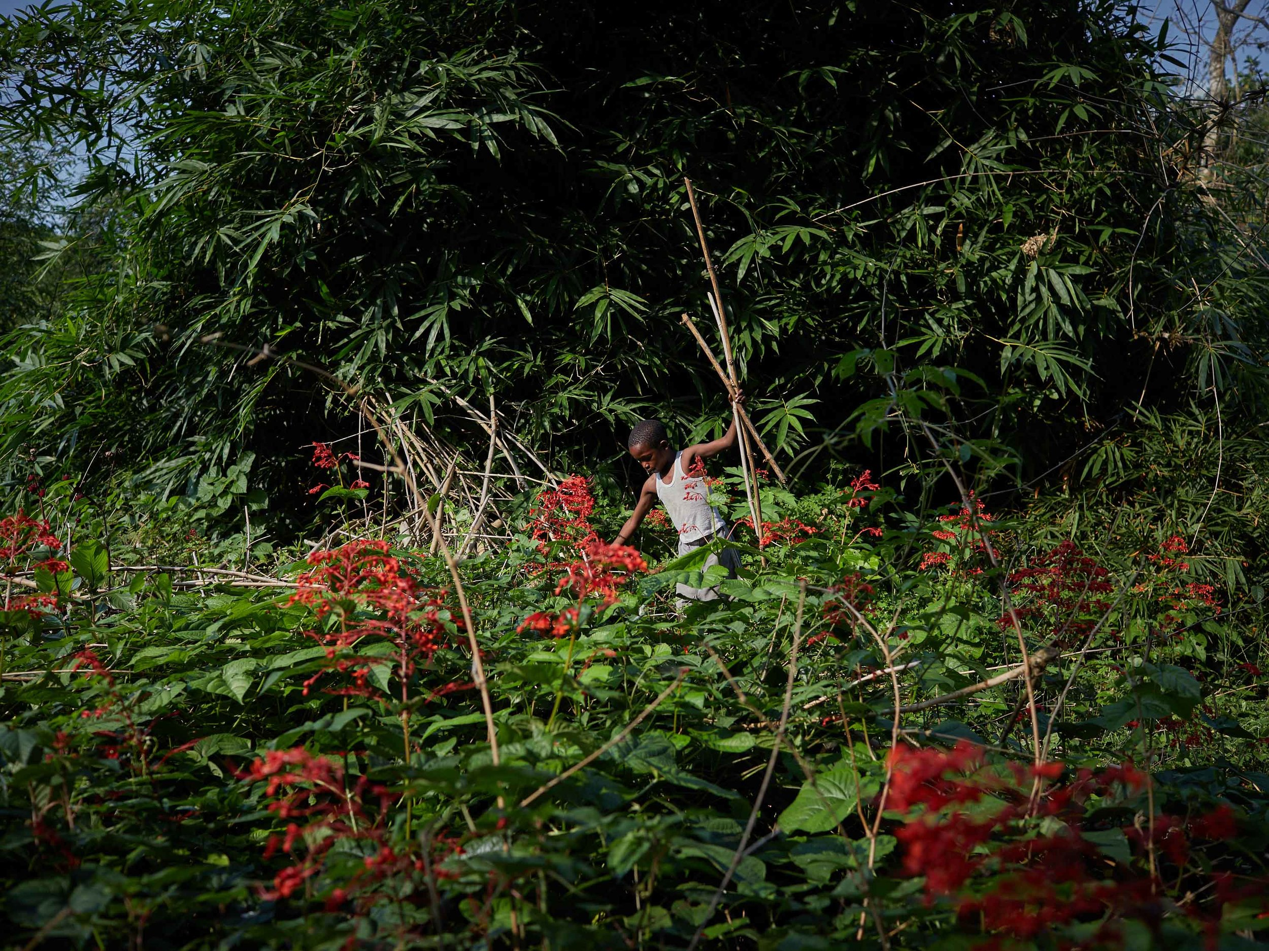 Jose Lisisa, 10, clears foliage around his village on the outskirts of Mbandaka, Equateur Province. Working amidst undergrowth creates a snakebite risk as well-camouflaged vipers and cobras can be disturbed and strike.