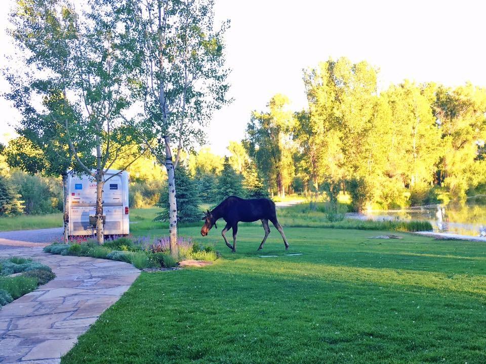 Cue the Moose