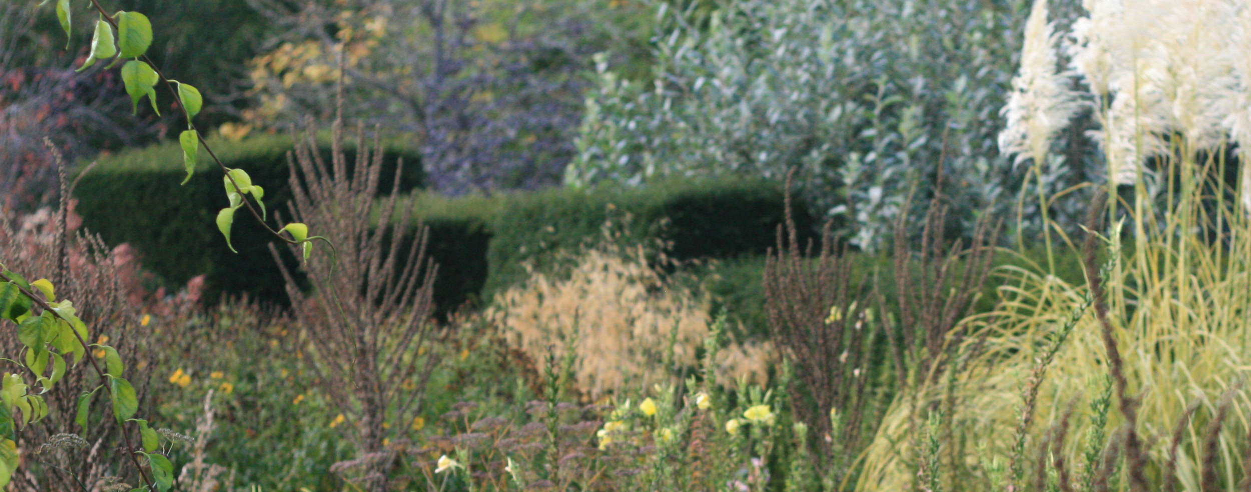 garden-strip.jpg
