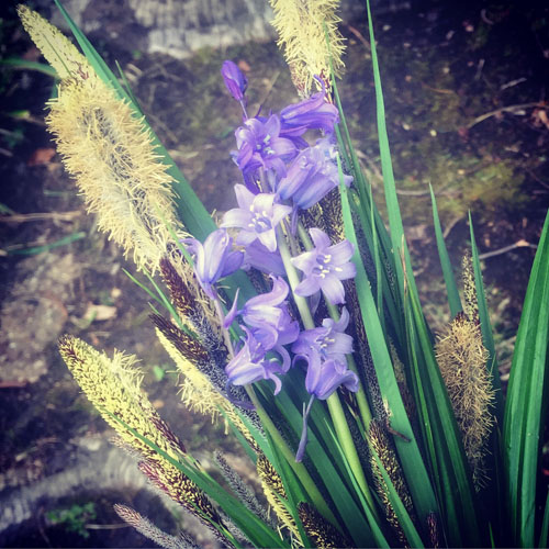 A posy of weedy things.  Carex pendula    (cut the flowers off before they go to seed!) and hybrid bluebells