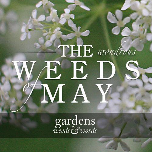 weedsofmay.jpg