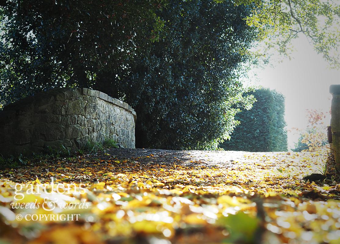 A golden carpet of hornbeam leaves a t the start of the River Walk