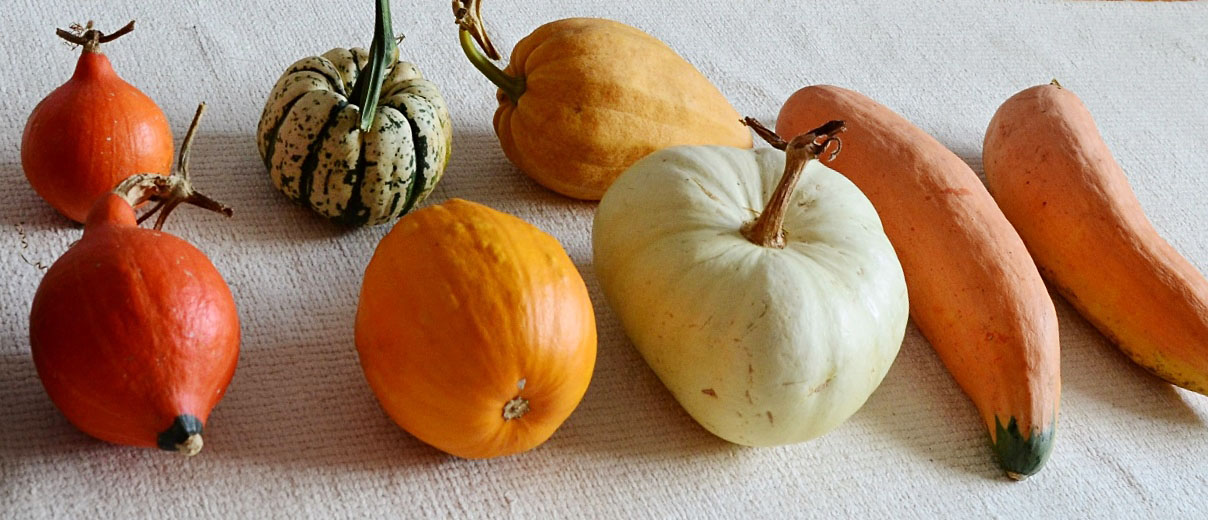 A skirmish of squashes which, whilst it clearly should be, almost certainly isn't the appropriate collective noun. Clockwise from bottom left:Potimarron (two), Sweet Dumpling, Thelma Sanders,North Georgia Candy Roaster (two),Flat White Boer,Sucrette