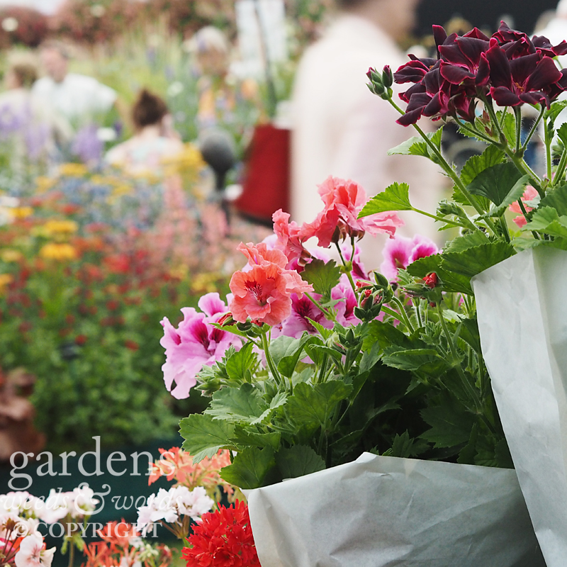 The plant sales area on the  Fibrex Nurseries   stand was busy on  RHS Hampton Court Flower Show gala night.