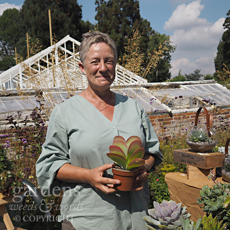 Fiona from Blue Leaf Plants, with the new frame of the Carnation House in the background