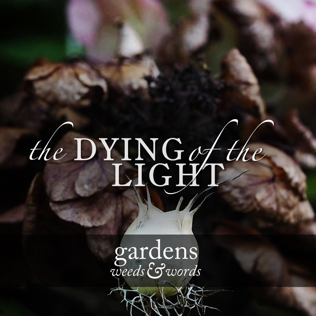 dying_of_light_header.jpg