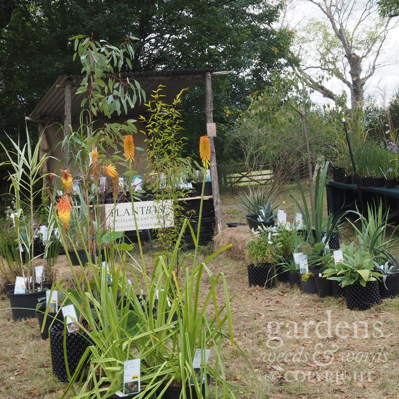 The  Plantbase  stand, demonstrating the  Air-pots which Graham has been introducing to the stock