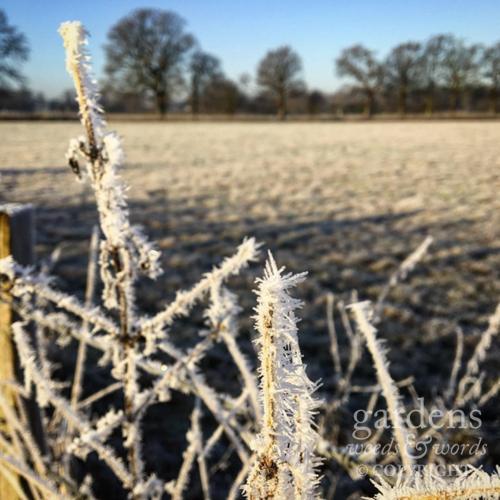 first_frost_03.jpg