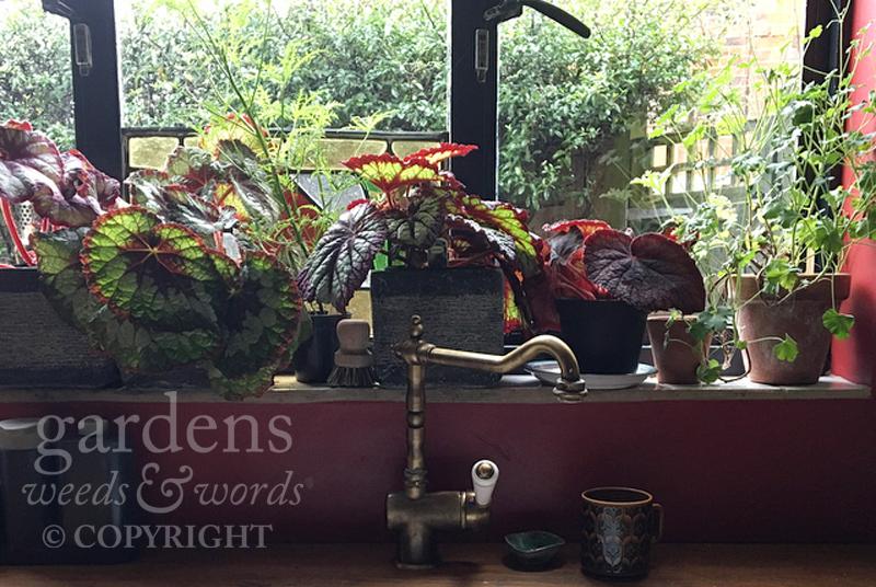 houseplants_window.jpg