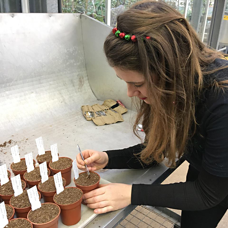 Miranda using tweezers from her dissecting kit to move seedlings with precision