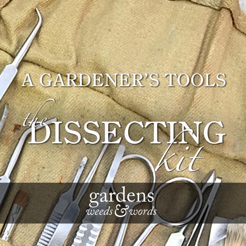 gww-dissecting-kit-header.jpg