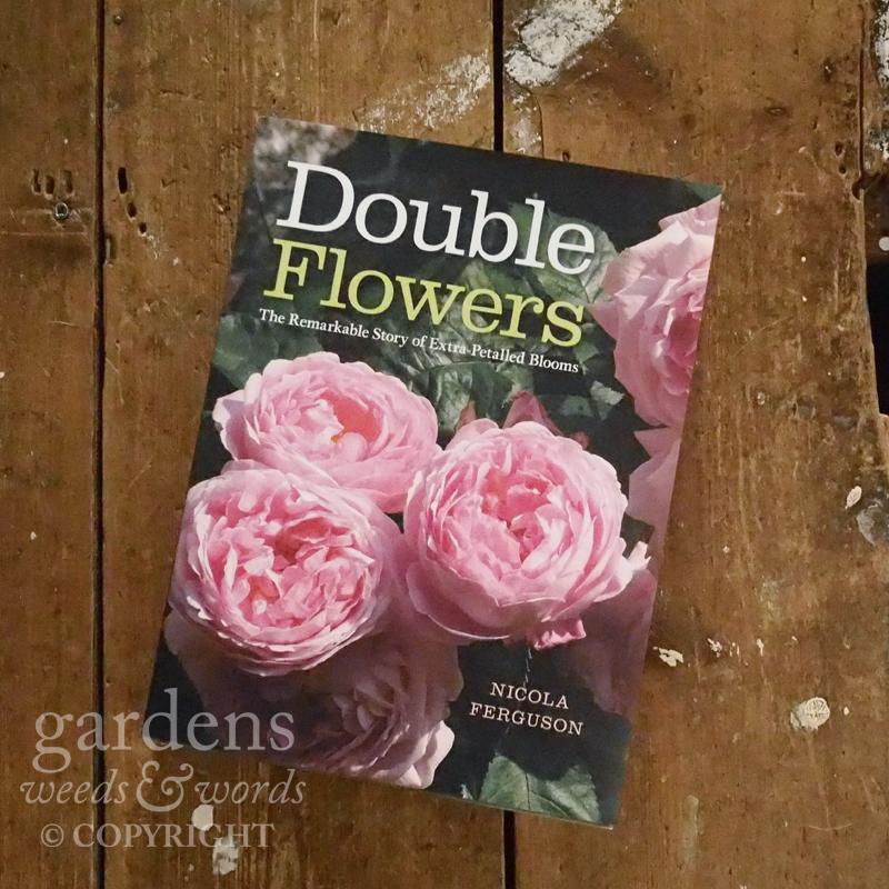 Double Flowers  by Nicola Ferguson