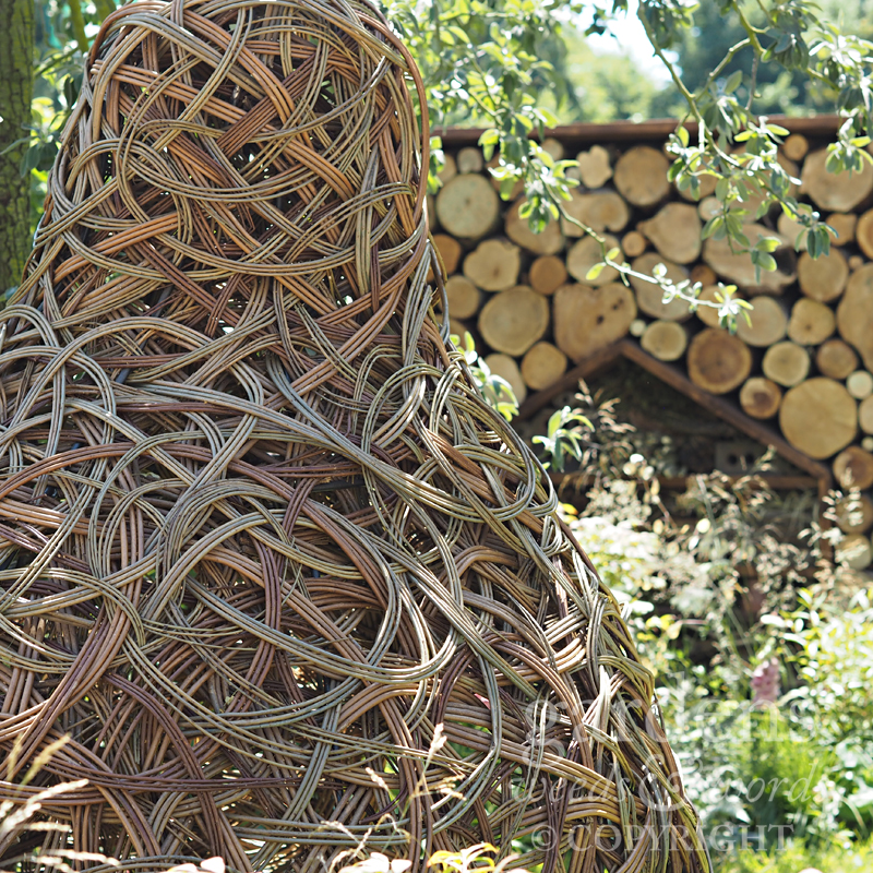 Detail from  Lilly Gomm's Family Garden  at the RHS Hampton Court Flower Show 2018