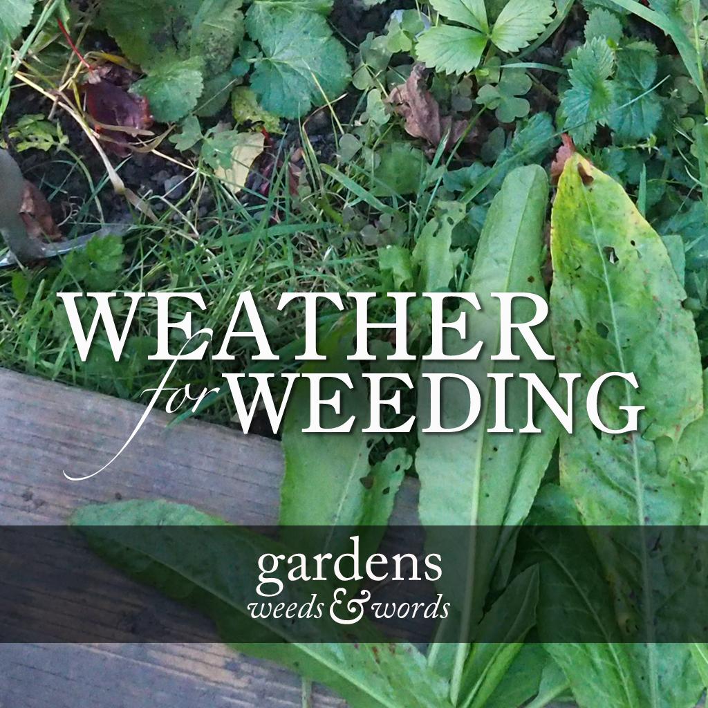 GWW_weeding_weather_HEADING.jpg