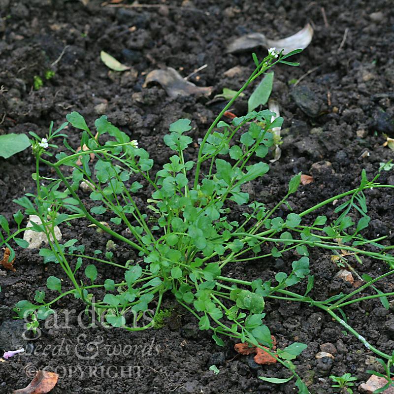 GWW-gardeninspo-day006.jpg