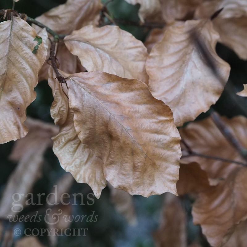 GWW-gardeninspo-day017.jpg