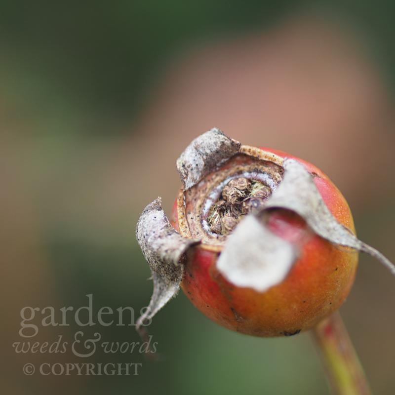 GWW-gardeninspo-day029.jpg
