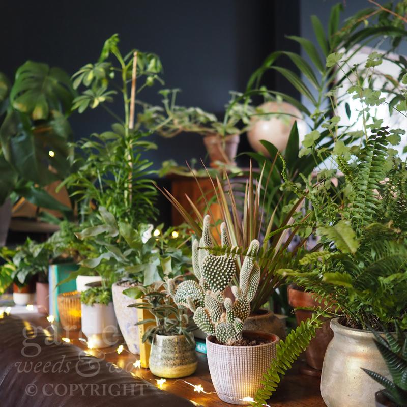 GWW-gardeninspo-day039.jpg